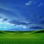 Grassy nature wallpaper