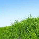 lush green desktop wallpaper