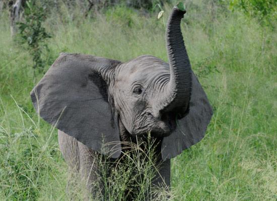 Baby elephants wallpaper - photo#16