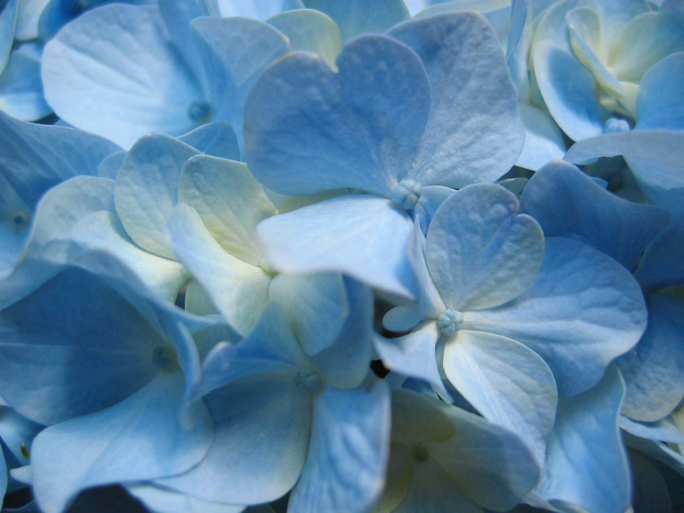 blue free wallpaper