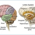 free brain picture