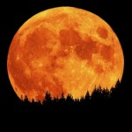 radish moon picture