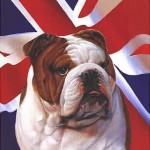 dog british picture