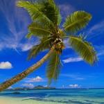 davos coconut wallpaper