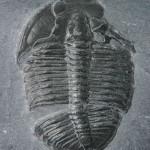 fossil lg wallpaper