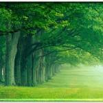 green tree pc wallpaper