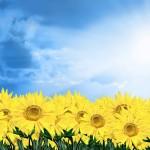 best flower wallpaper