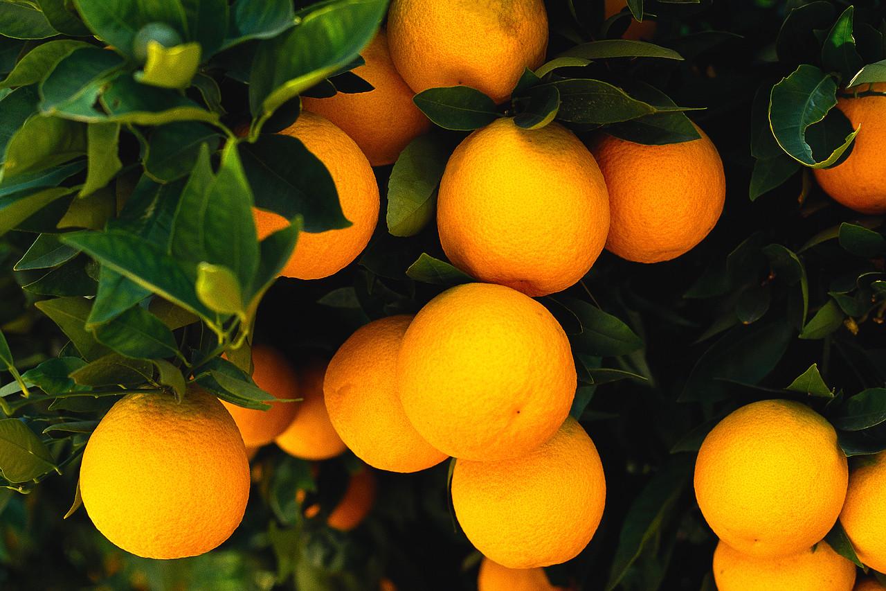 Fruit images wallpaper - Orange Fruit Wallpaper