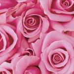 3d flower background wallpaper