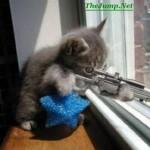 sniper cat picture