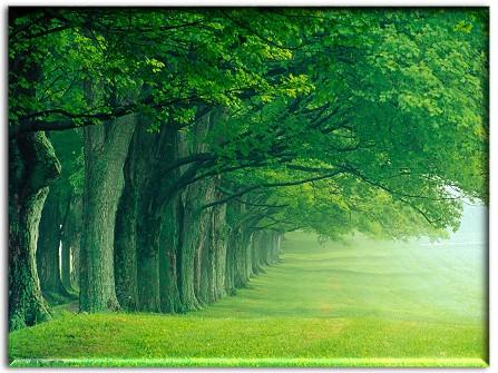 green tree desktop wallpaper