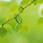 widescreen leaves fresh wallpaper