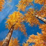 sky fall wallpaper