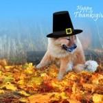 dog thanksgiving wallpaper