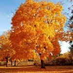 sweet fall wallpaper