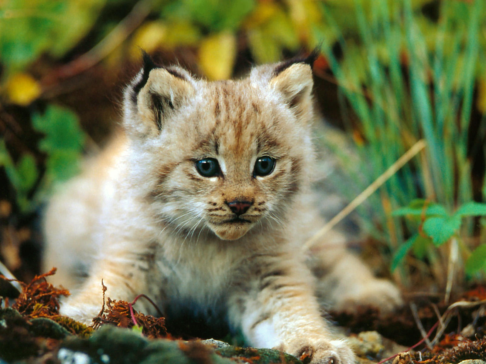 Pets World Cute Animals Hd Photos: Beautiful Animal Photos
