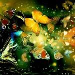 art butterfly wallpaper