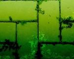 nature green wallpaper