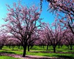 purple free spring wallpaper
