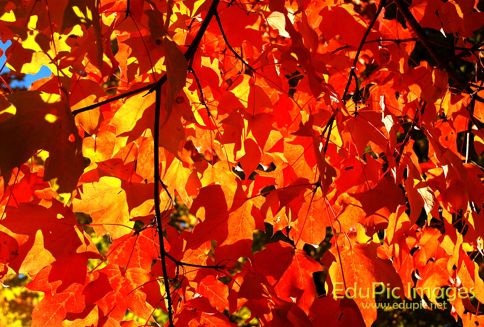fall desktop wallpaper