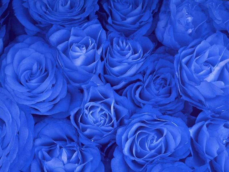 blue beautiful pattern wallpaper