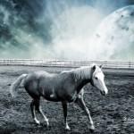 nice horses wallpaper