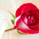 nice love flower