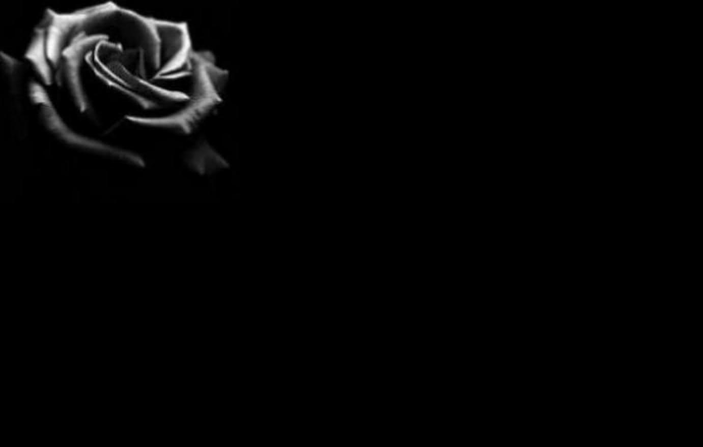 Black Rose White Background nice black rose background