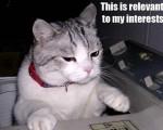 nice funny cat pics
