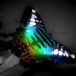 butterfly cool wallpaper hd
