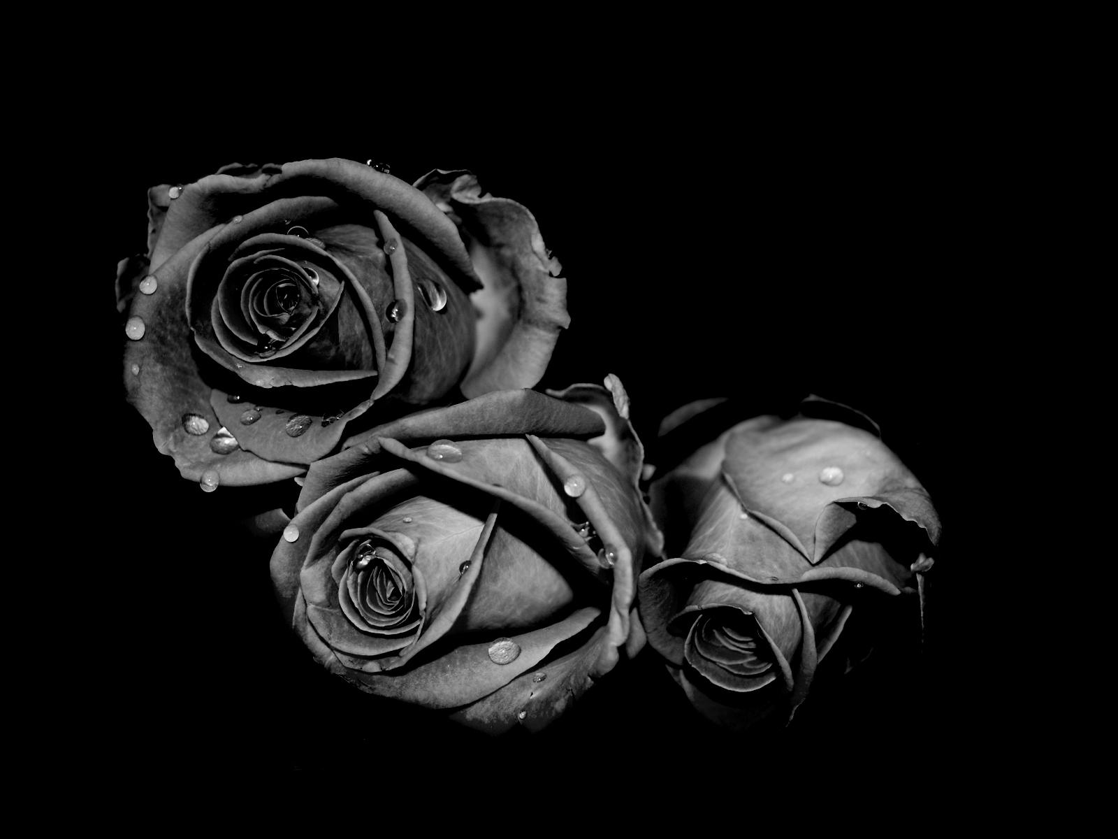 Black Rose Background