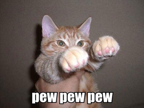 fantasy funny cat pics