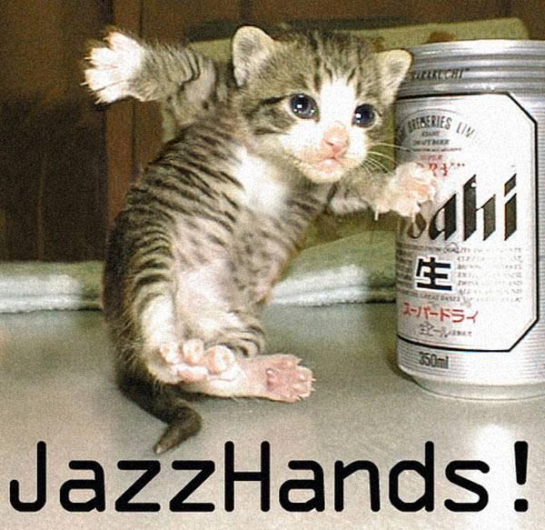 lovely funny cat pics