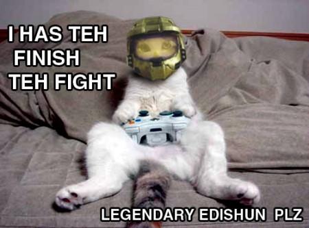 high quality funny cat pics