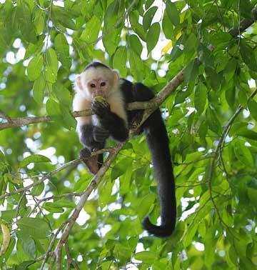 xcitefun spider monkey picture