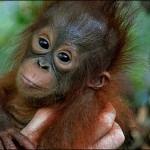 free monkey photo