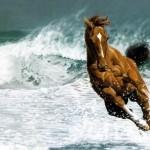 free horses wallpaper