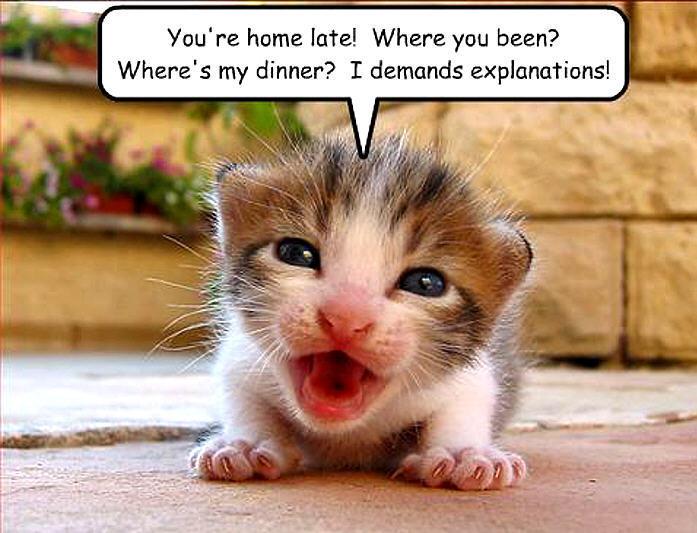 super funny animal pics