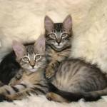 three picture of cat