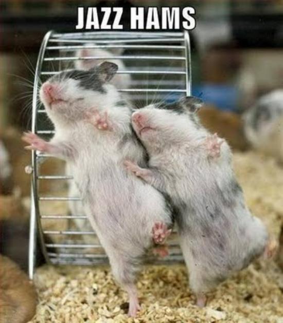 great funny animal pics
