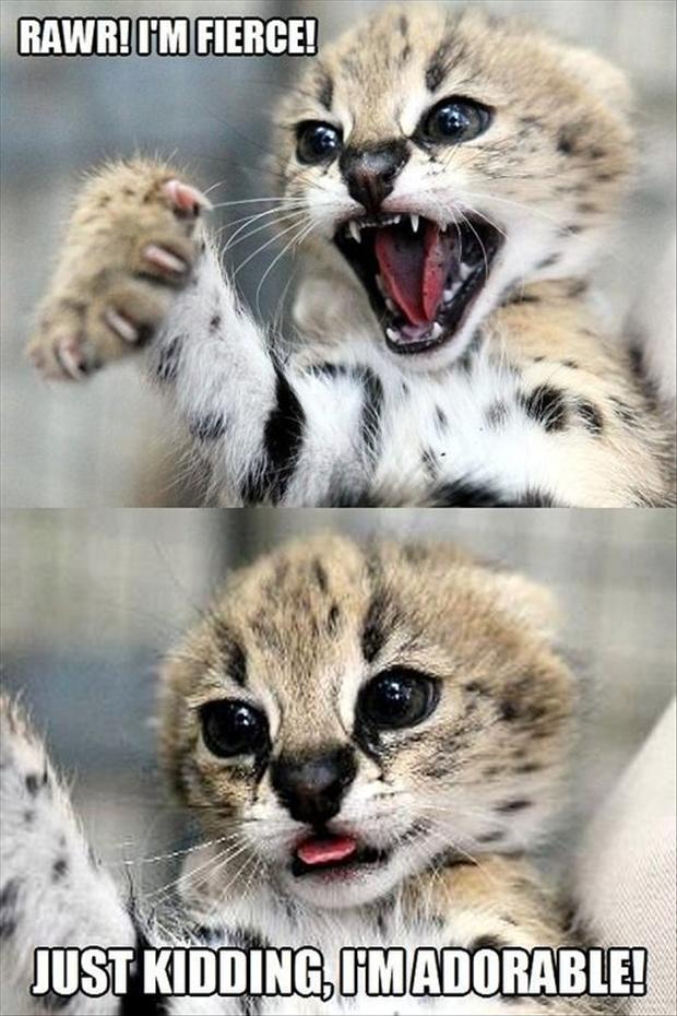 awesome funny animal pics