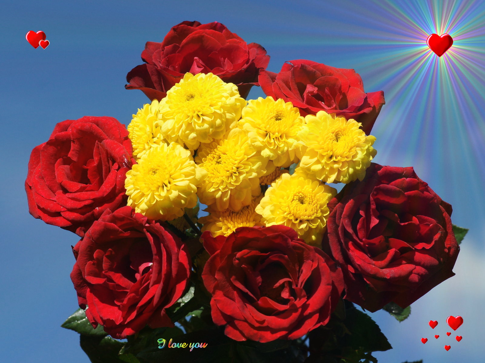 love flower | hd wallpapers pulse