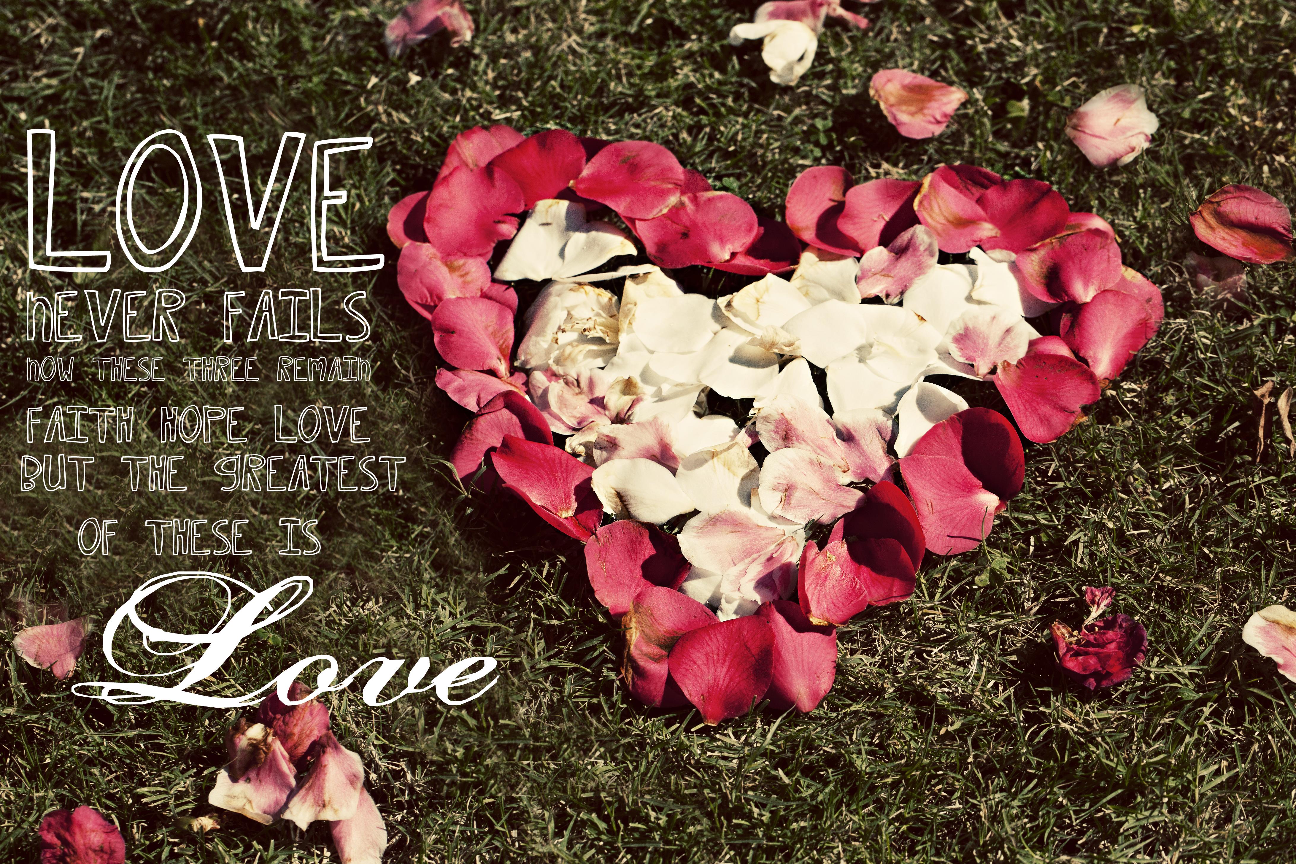 love flower  hd wallpapers pulse, Natural flower