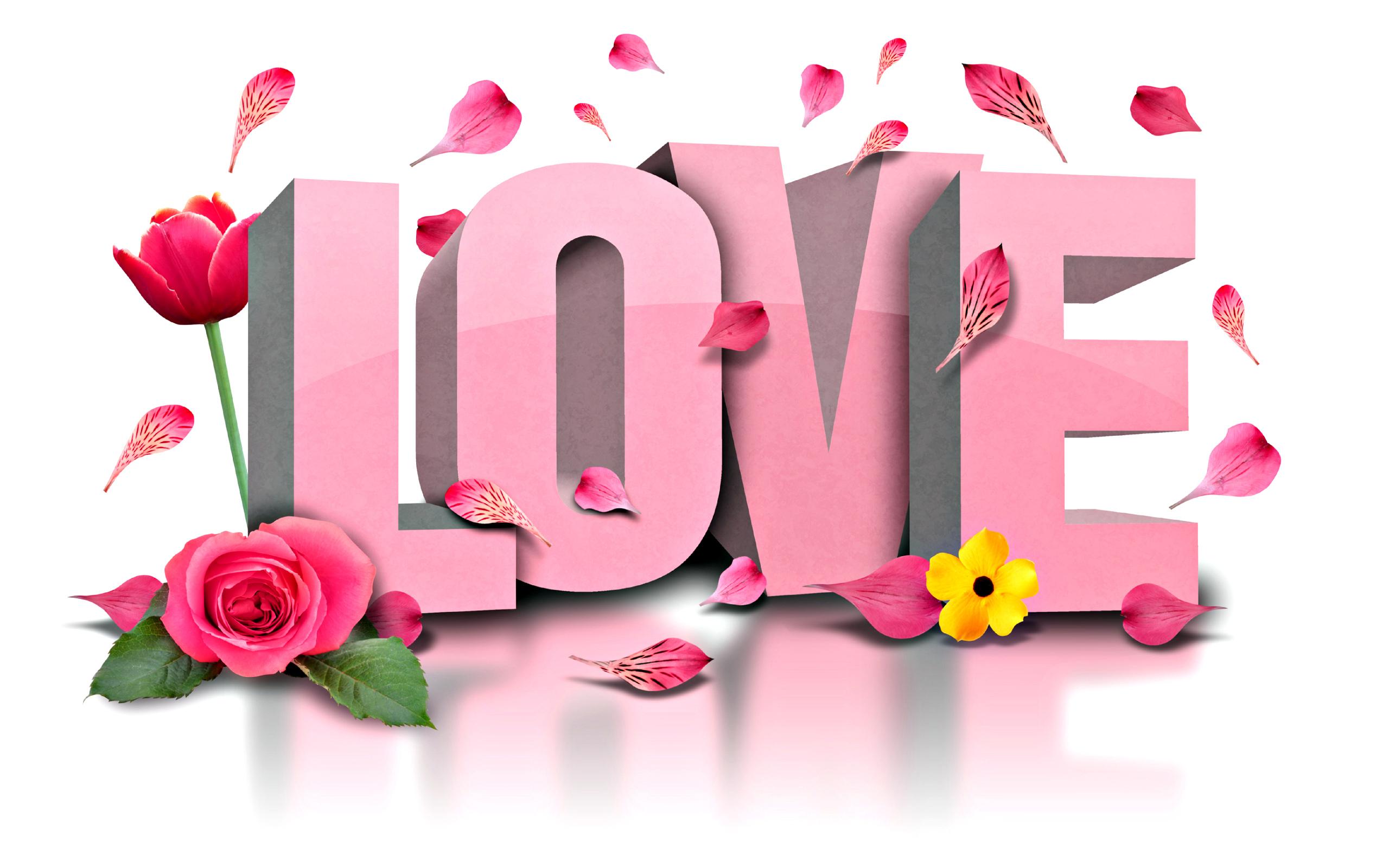 love flower  hd wallpapers pulse, Beautiful flower