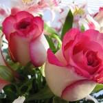 pink flower beautiful photos