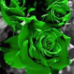 digital green rose picture
