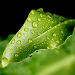 digital nature picture