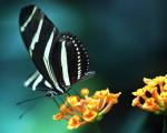 nature download free wallpaper