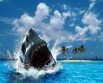 ocean hd background for desktop-