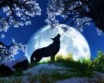 nature free desktop backgrounds